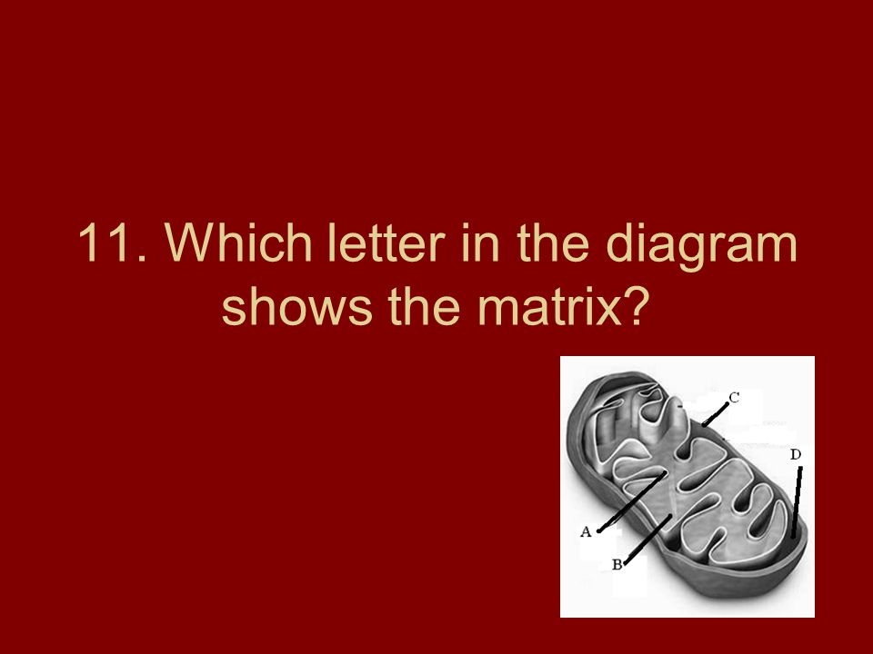 11. Which letter in the diagram shows the matrix