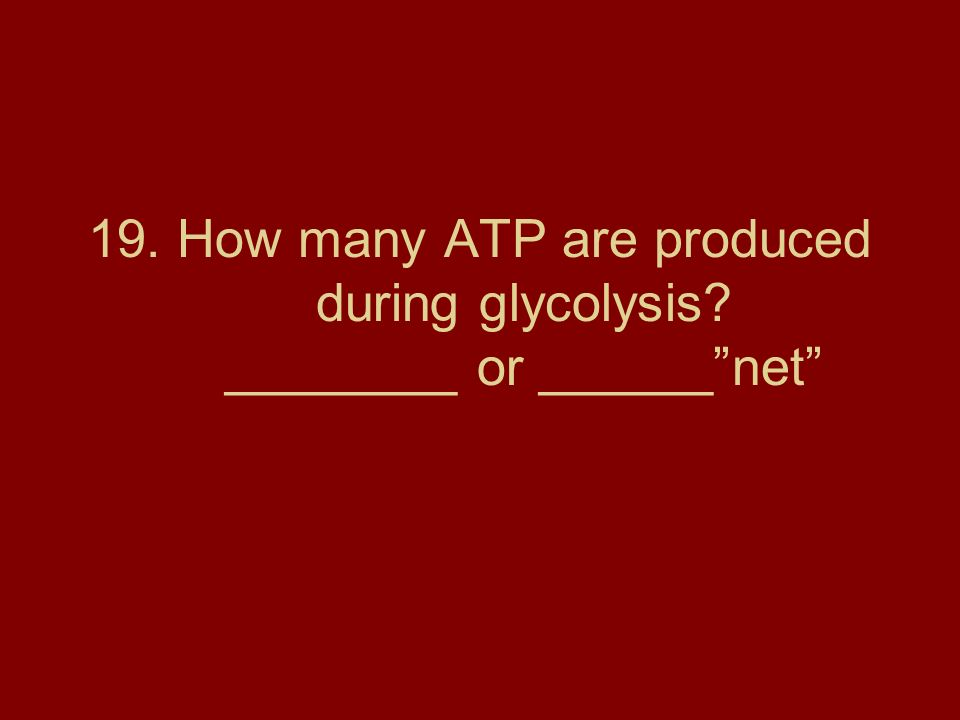 19. How many ATP are produced during glycolysis