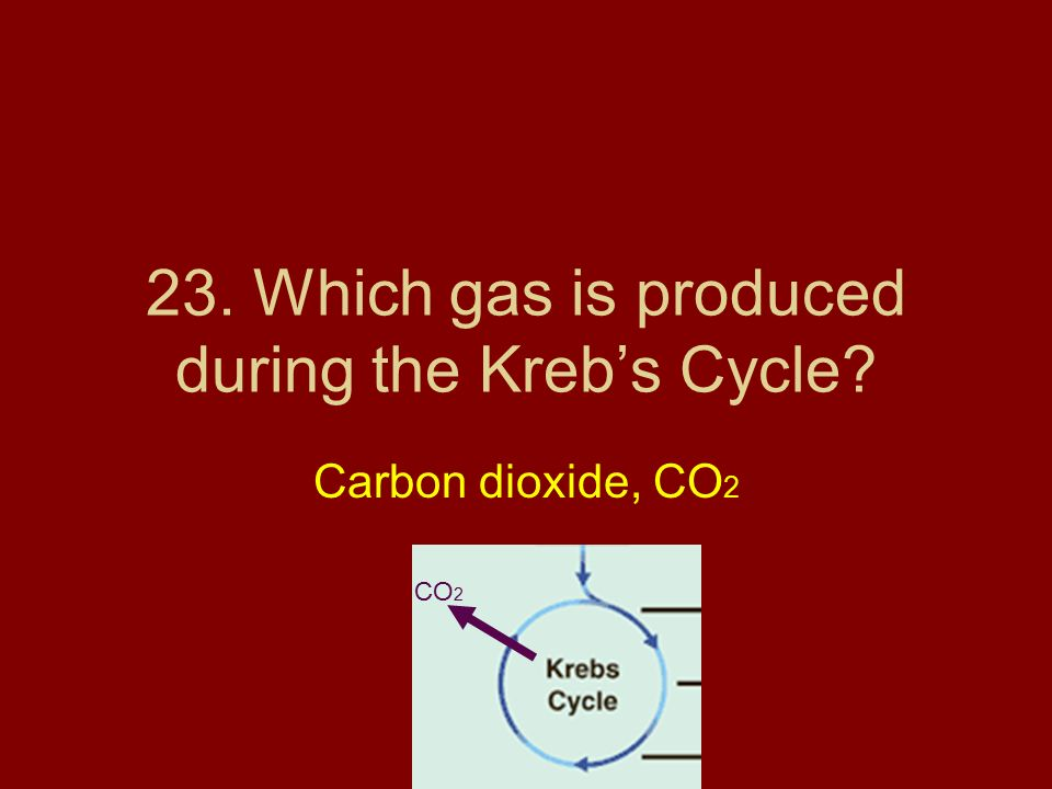 23. Which gas is produced during the Kreb's Cycle