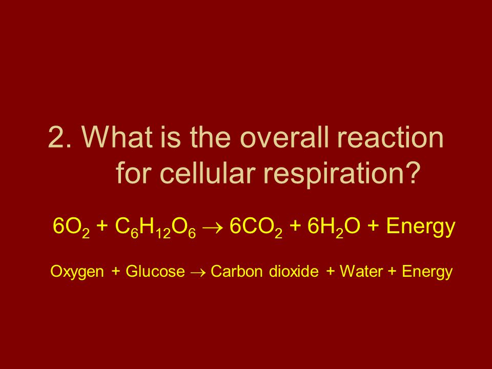 2. What is the overall reaction for cellular respiration