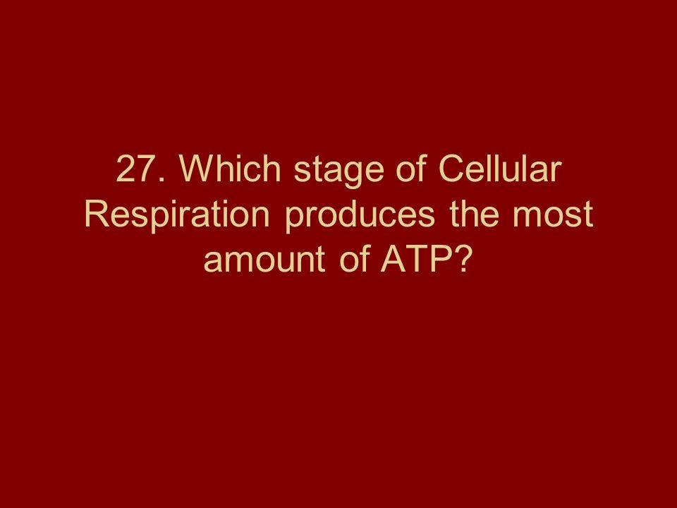 27. Which stage of Cellular Respiration produces the most amount of ATP