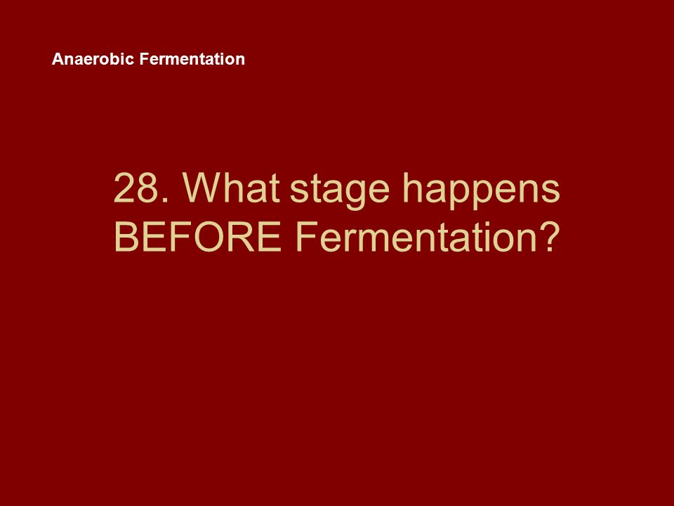 28. What stage happens BEFORE Fermentation