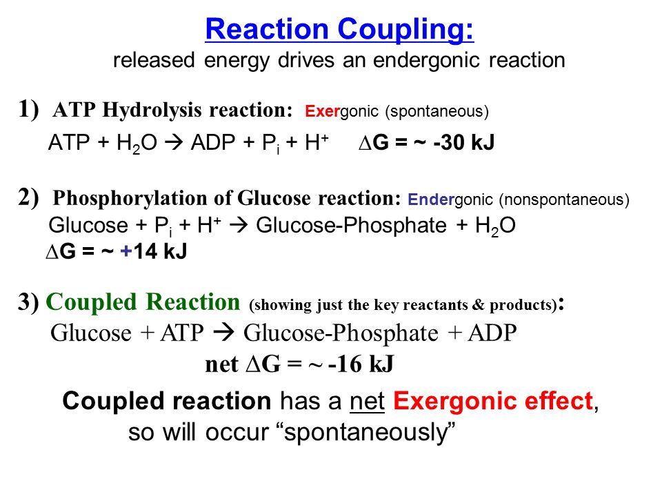 coupled reactions A: reactions in which endergonic reactions obtain the energy to go forward from exergonic reactions b: reactions in which exergonic reactions obtain the energy to go forward from endergonic reactions c: any reactions that are accelerated by an enzyme d: reactions that lower the.