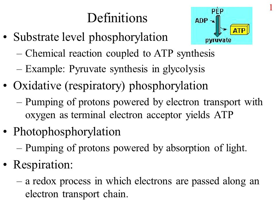 Definitions Substrate Level Phosphorylation Ppt Video Online Download