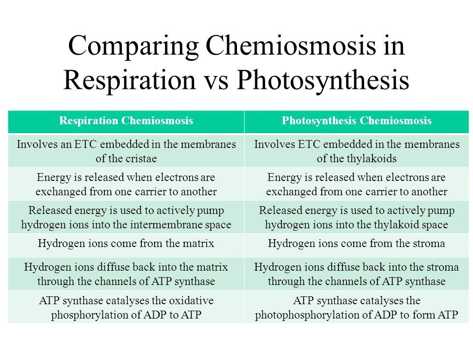 Photosynthesis and Cellular Respiration Essay Sample