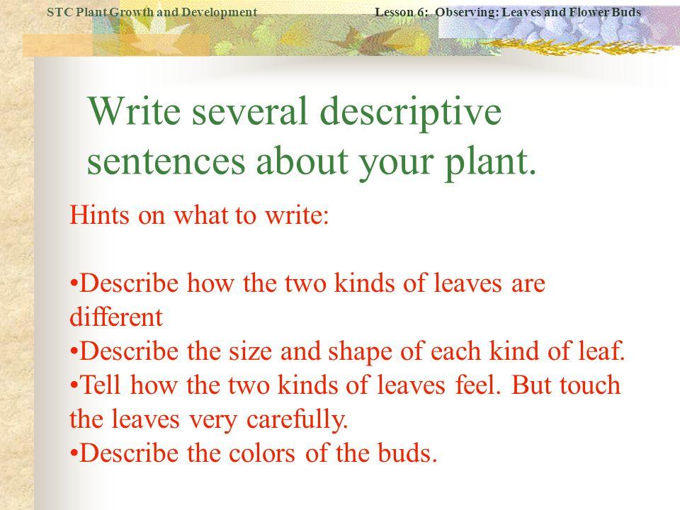 how to write descriptive sentences