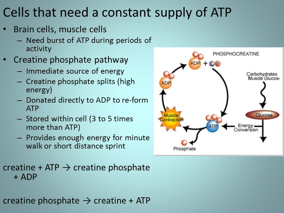 Aerobic Cellular Respiration - ppt video online download