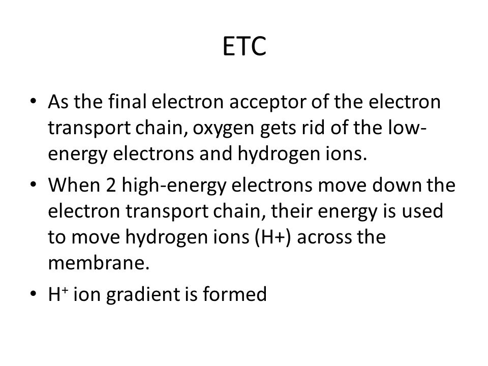 ETC As the final electron acceptor of the electron transport chain, oxygen gets rid of the low-energy electrons and hydrogen ions.