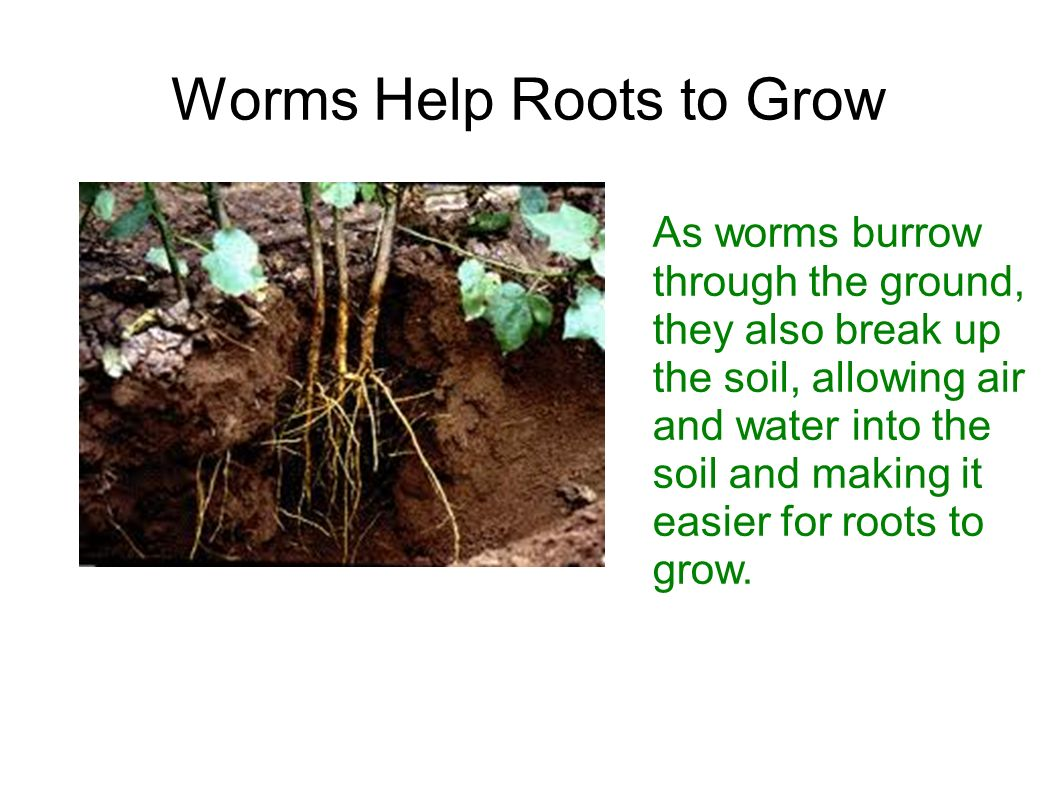 watering to promote root growth