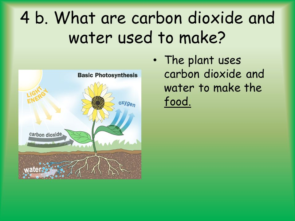 how do plants acquire carbon dioxide and release oxygen Re how does oxygen enter the leaves of a plant at night how do plants obtain oxygen what are plants made of oxygen, carbon dioxide.