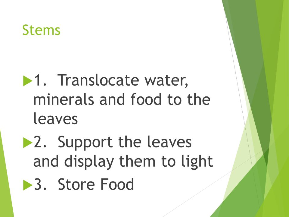1. Translocate water, minerals and food to the leaves