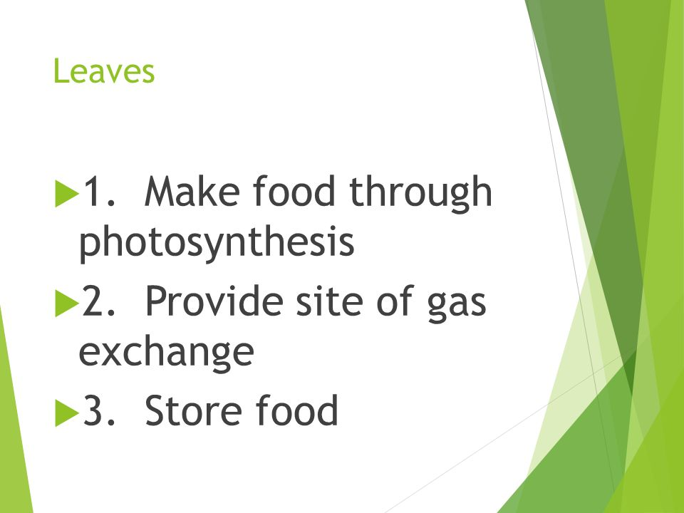 1. Make food through photosynthesis 2. Provide site of gas exchange