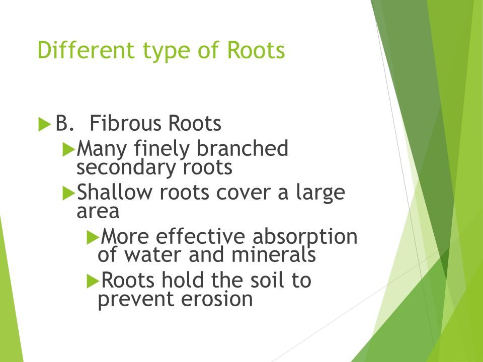 Good things we get from plants ppt video online download for Different type of water