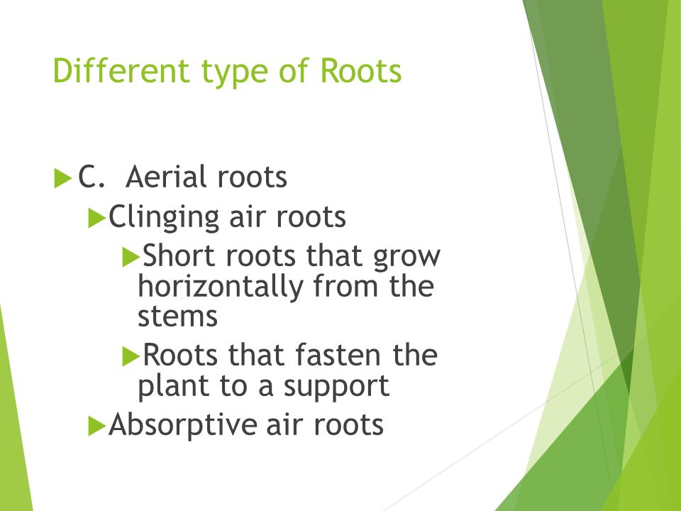 Different type of Roots