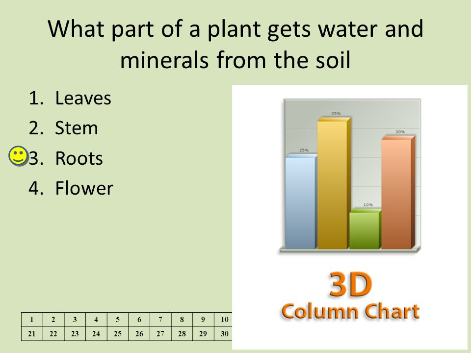 What part of a plant gets water and minerals from the soil