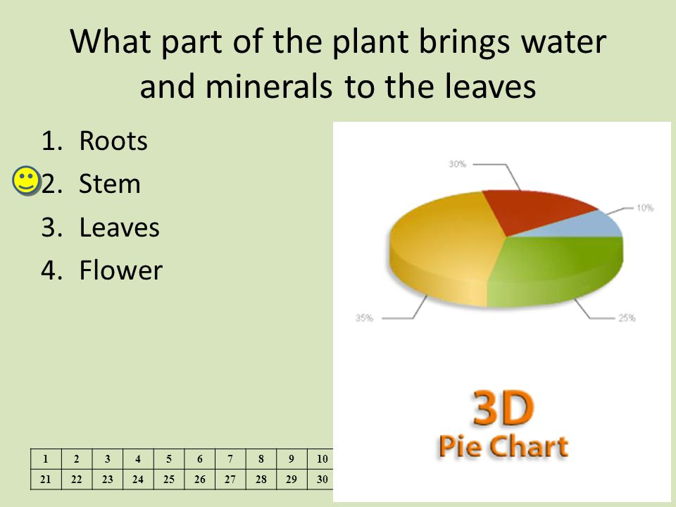 What part of the plant brings water and minerals to the leaves