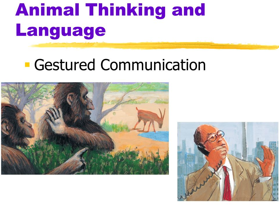 Animal Thinking and Language