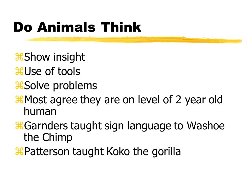 Do Animals Think Show insight Use of tools Solve problems