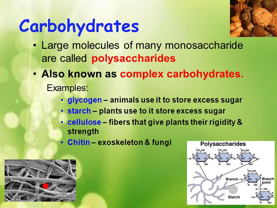 how to plants produce and store carbohydrates
