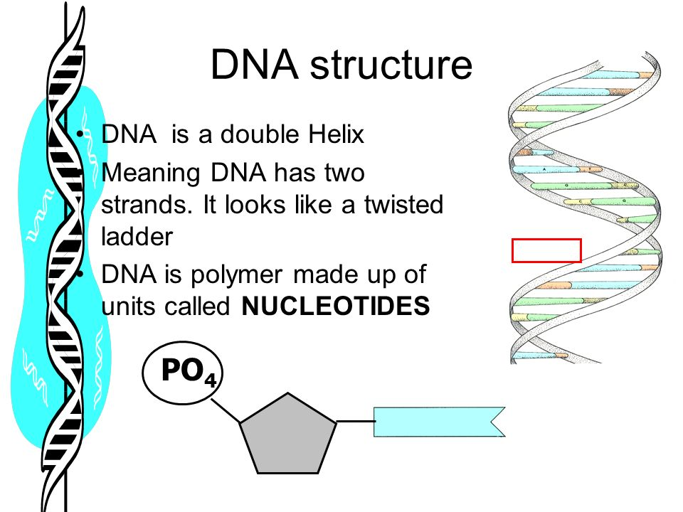 Dna structure ppt download 5 dna structure malvernweather Choice Image