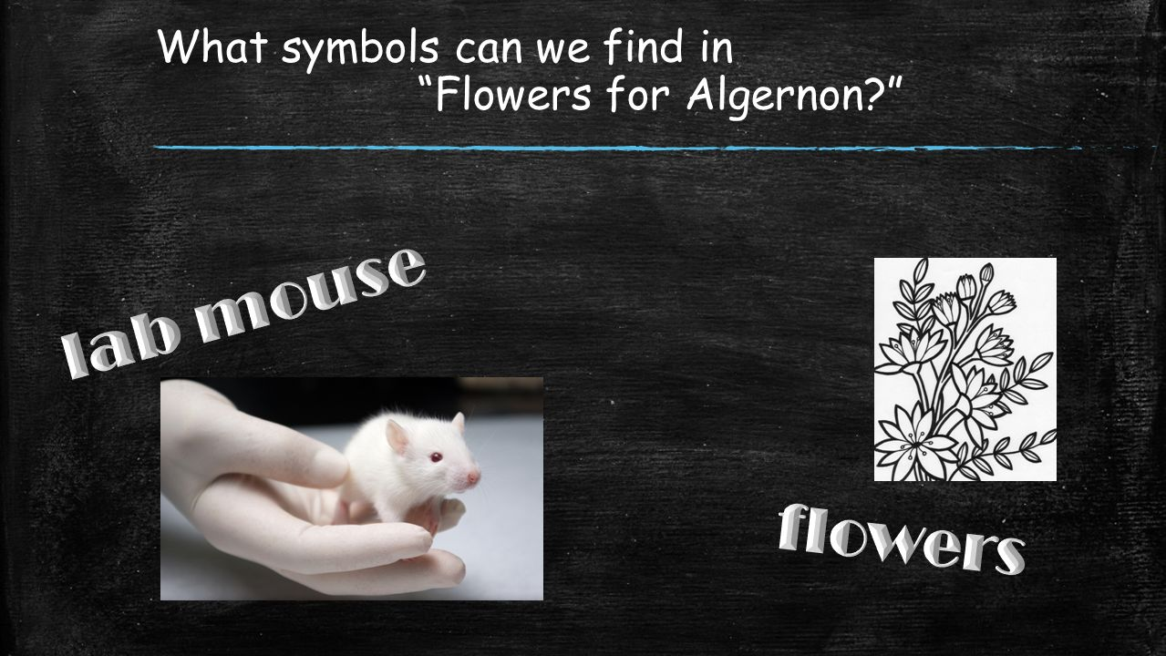 What Symbols Can We Find In Flowers For Algernon