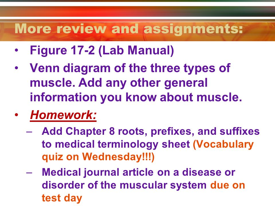 muscular system objectives: review anatomical terminology. - ppt, Muscles