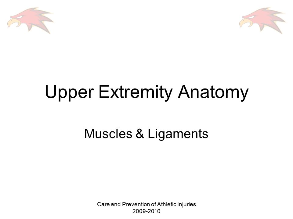 Upper Extremity Anatomy - ppt video online download