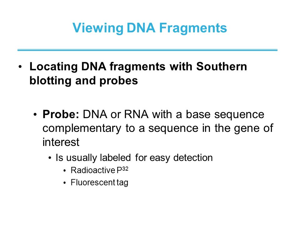 Viewing DNA Fragments Locating DNA fragments with Southern blotting and probes.