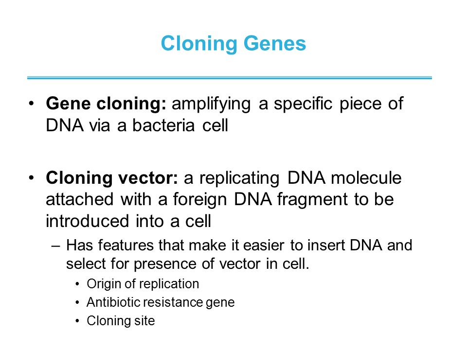 Cloning Genes Gene cloning: amplifying a specific piece of DNA via a bacteria cell.