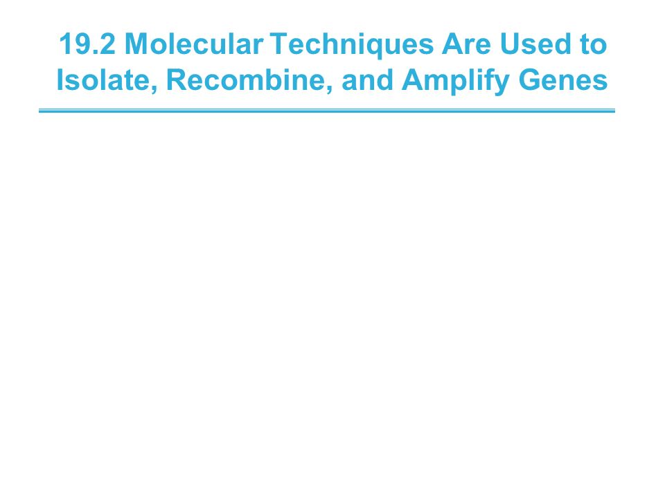 19.2 Molecular Techniques Are Used to Isolate, Recombine, and Amplify Genes