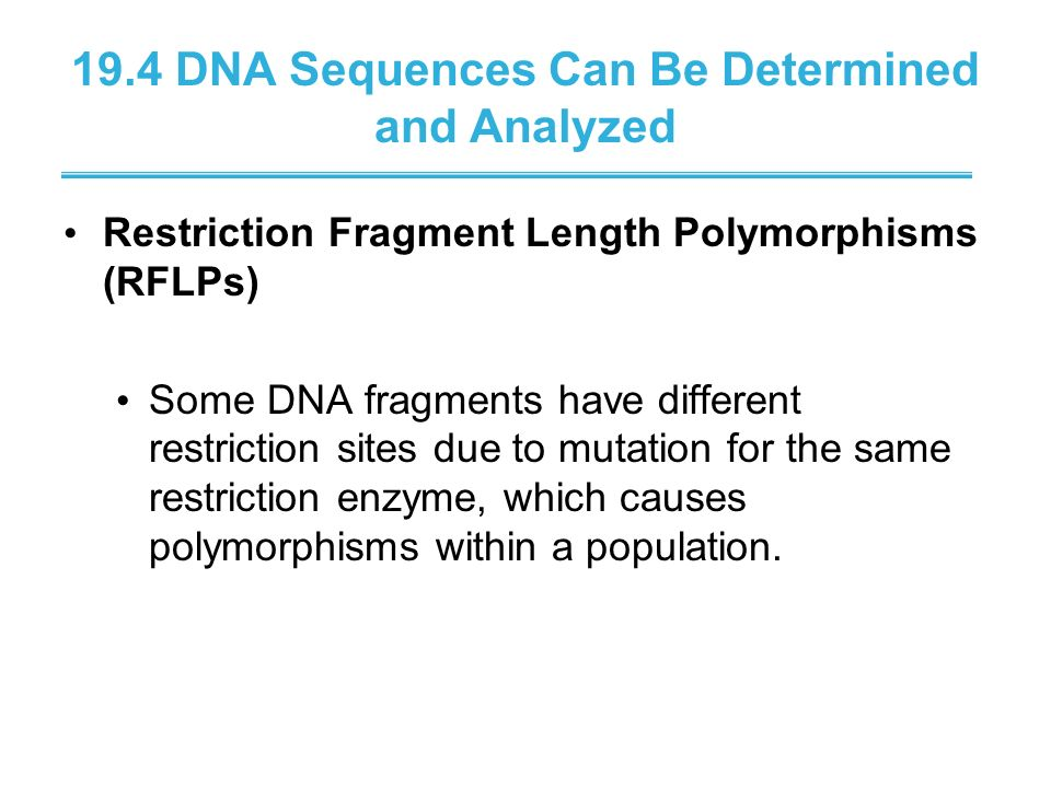19.4 DNA Sequences Can Be Determined and Analyzed