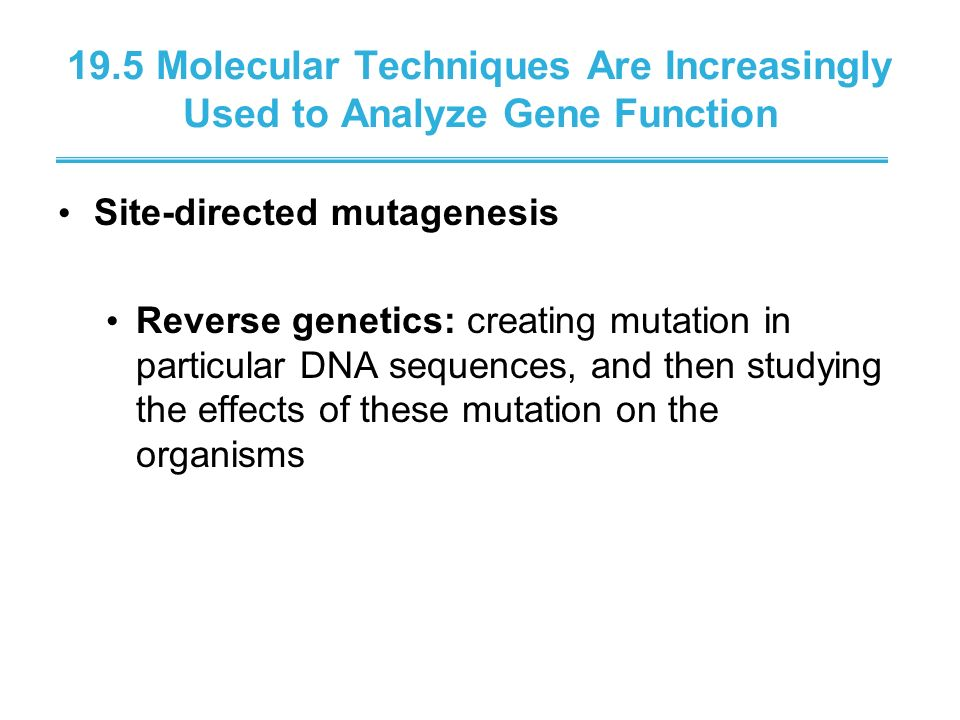 19.5 Molecular Techniques Are Increasingly Used to Analyze Gene Function