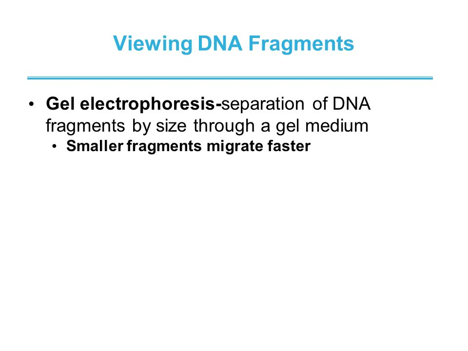 Viewing DNA Fragments Gel electrophoresis-separation of DNA fragments by size through a gel medium.