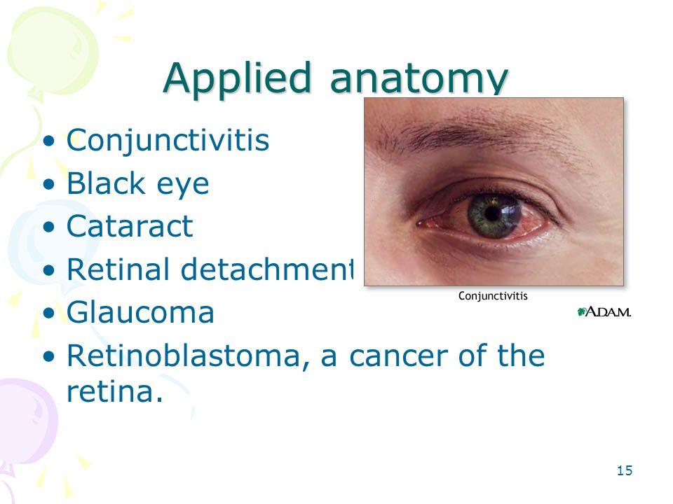 Tolle Retina Eye Anatomy Galerie - Menschliche Anatomie Bilder ...