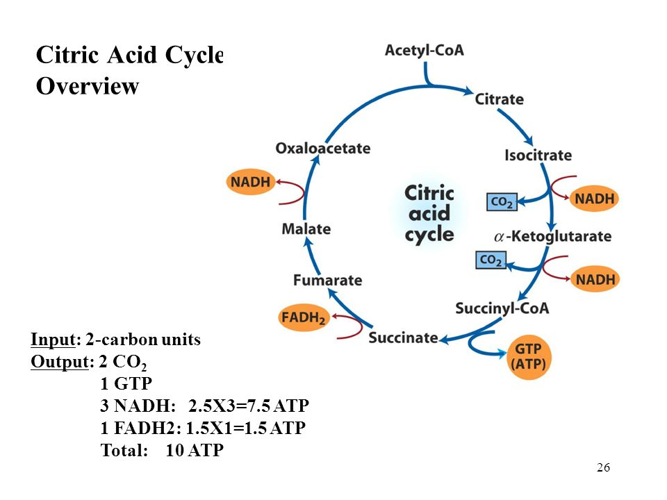 glycolysis 1  from glucose to pyruvate  step reactions  3
