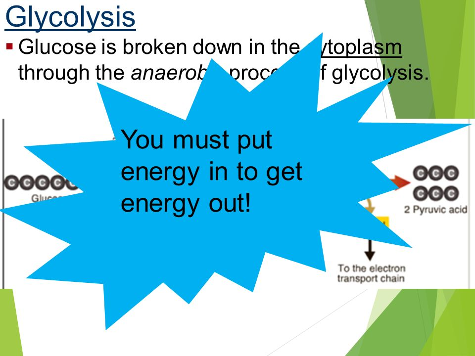 Glycolysis You must put energy in to get energy out!