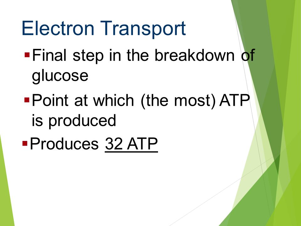 Electron Transport Final step in the breakdown of glucose