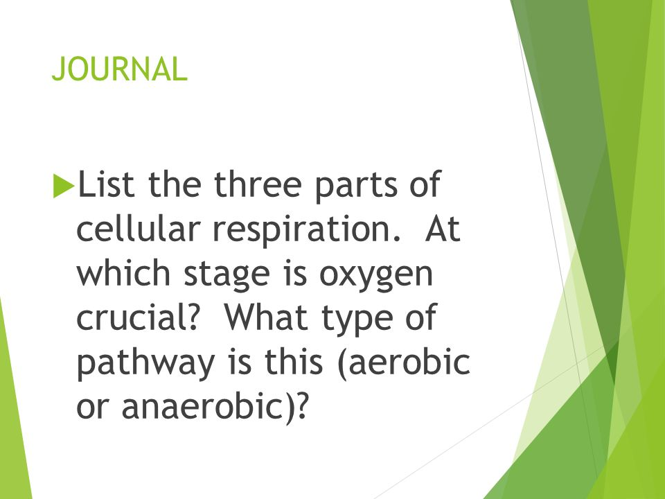 JOURNAL List the three parts of cellular respiration.