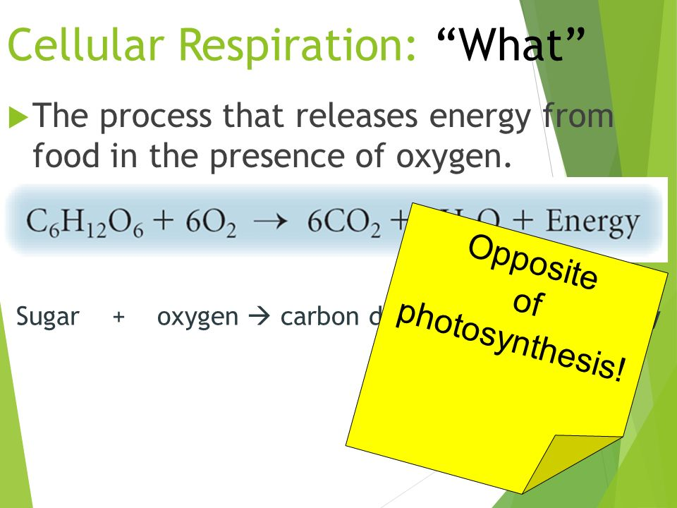 Cellular Respiration: What