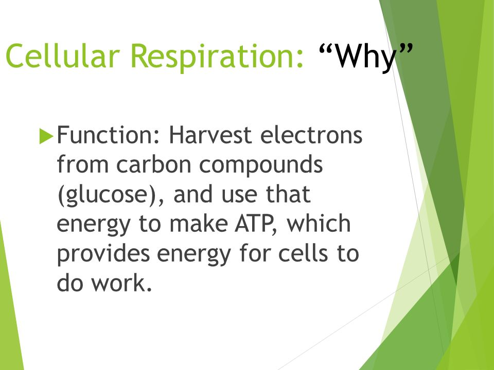 Cellular Respiration: Why