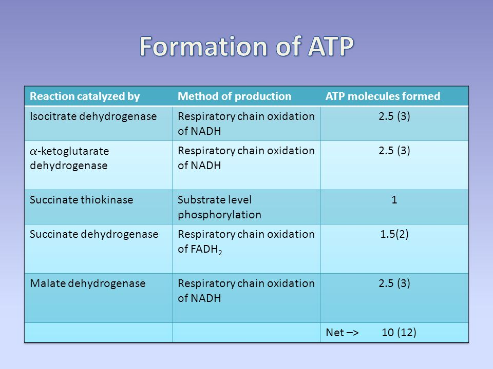 overview of metabolism amp the citric acid cycle ppt download