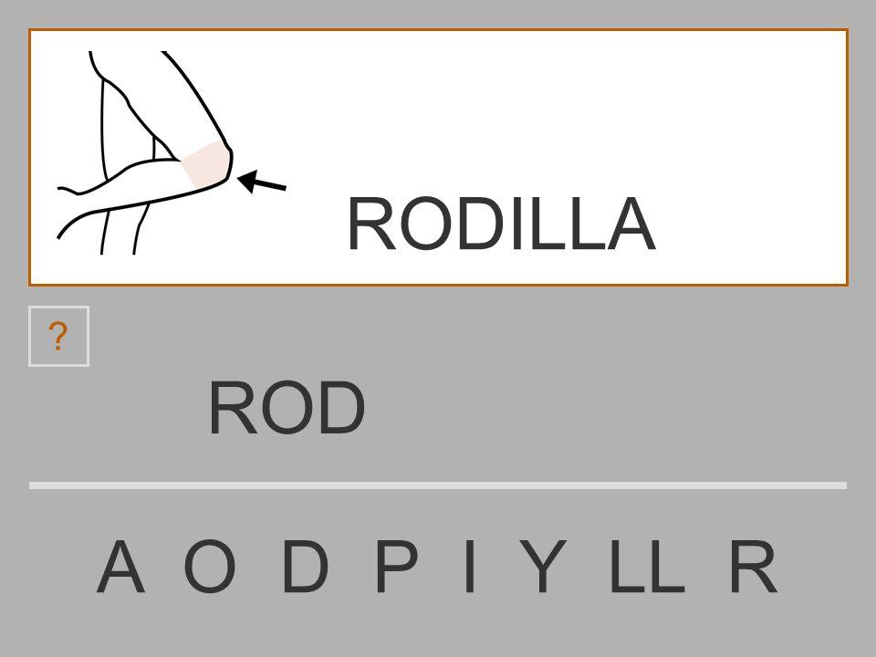 RODILLA ROD A O D P I Y LL R