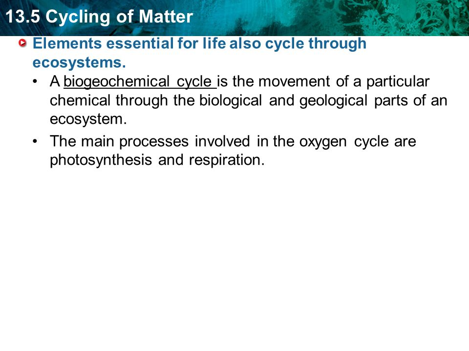 Elements essential for life also cycle through ecosystems.