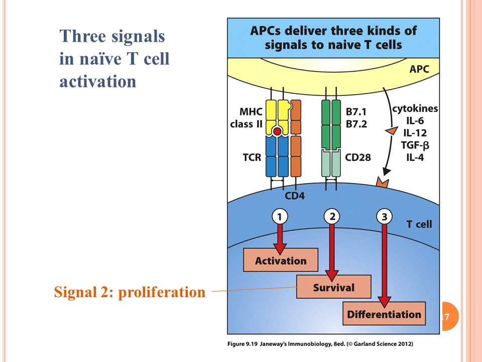 In vivo instruction of suppressor commitment in naive t cells