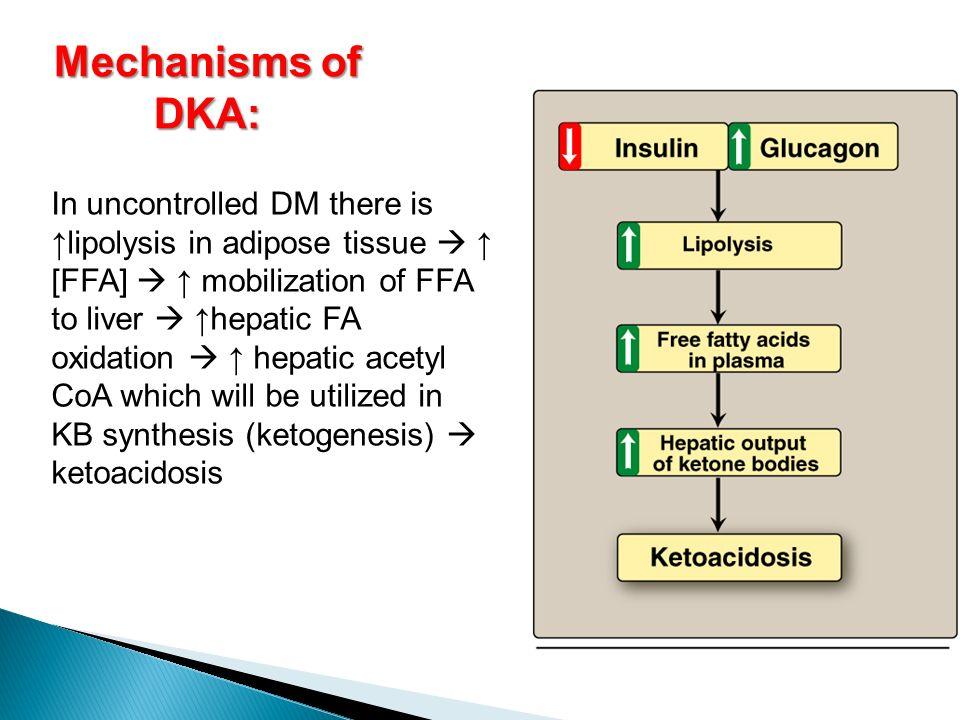 Mechanisms of DKA: