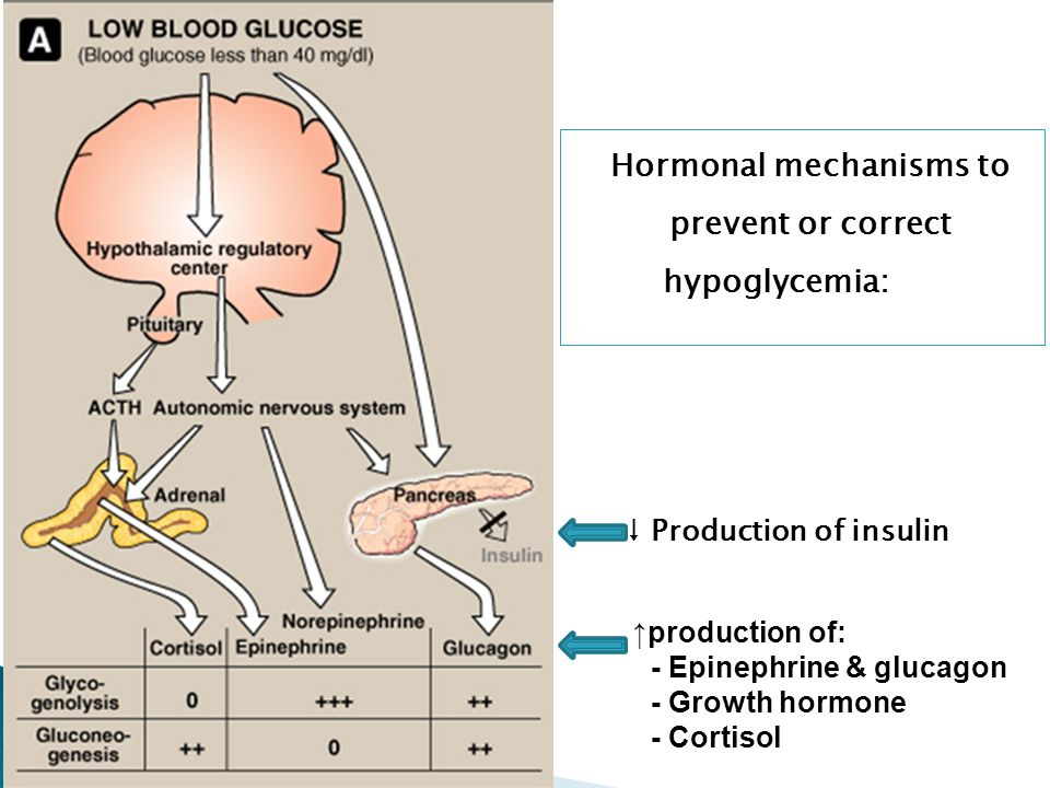 Hormonal mechanisms to prevent or correct hypoglycemia: