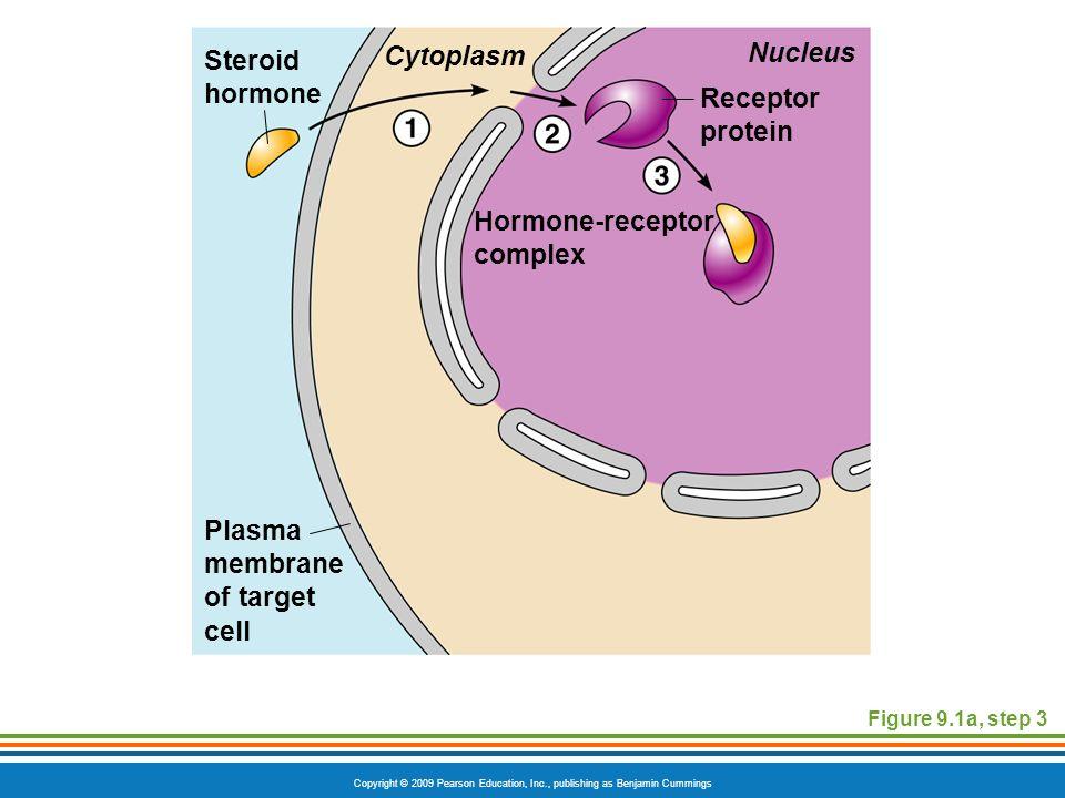 nonsteroid hormone