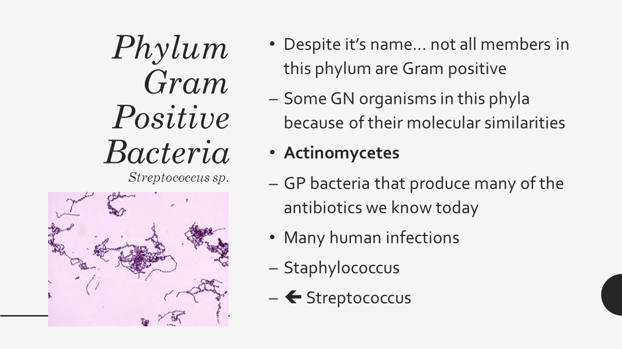 bacteria classification by gram staining At the end of gram staining, gram positive bacteria appear violet or purple whereas gram negative bacteria appear pink preparation of smear.