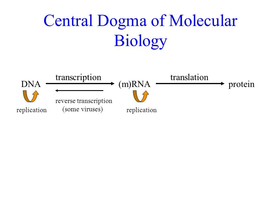 fundamentals ii  bacterial genetics