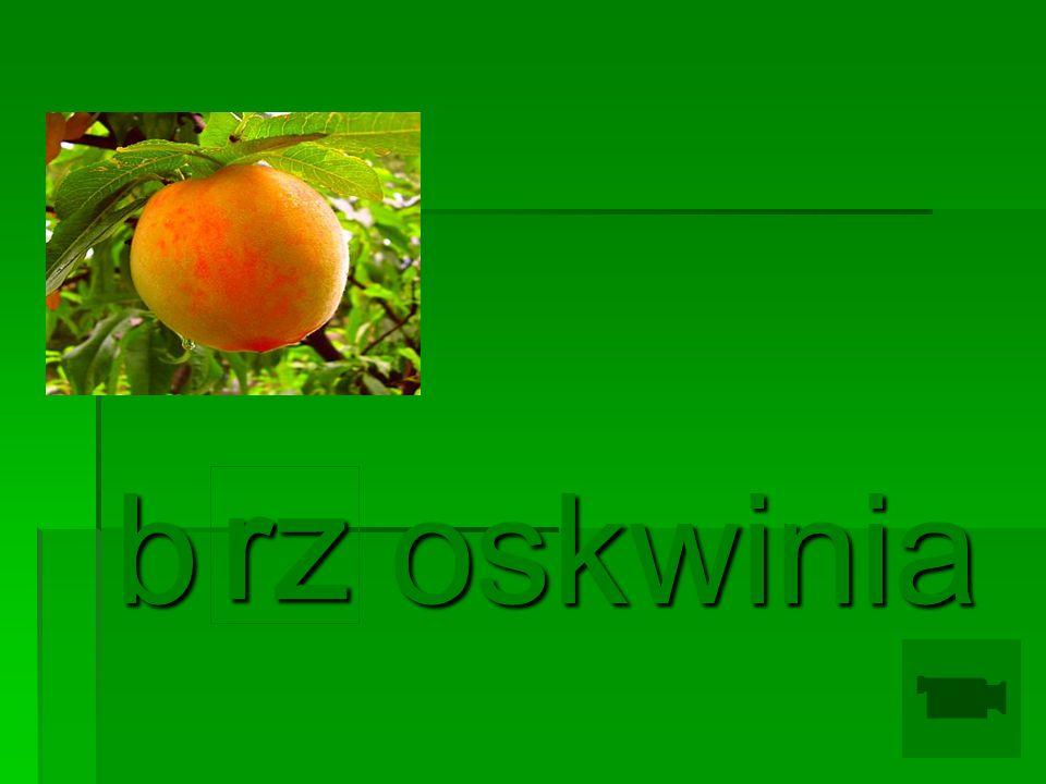 b oskwinia rz